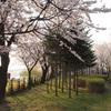 仙遊島公園