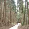 吉野山 (吉野観光協会)