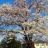 区立桜樹児童遊園