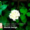 Shoichi Design