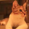 猫のいる休憩室-谷保ねこ